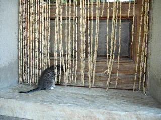 Macho, macho man.....oops Macho CAT!