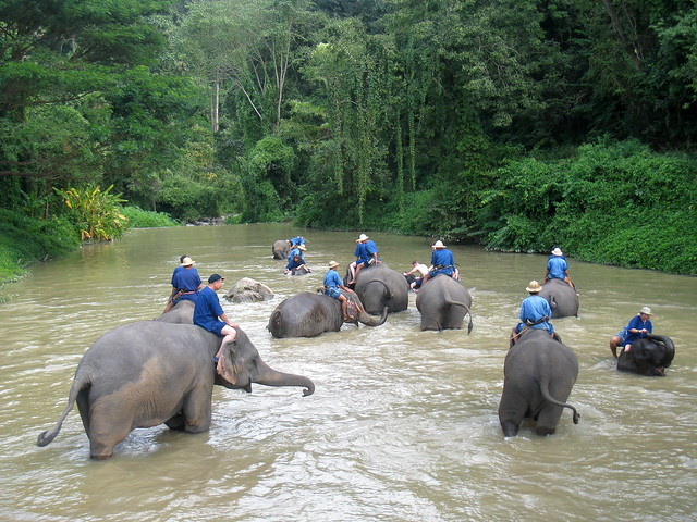 Elephant Conservatory
