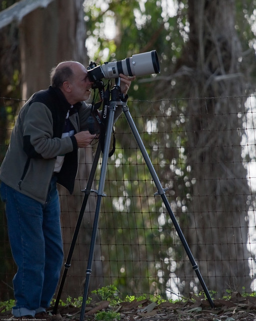 Serious Canon Photographer with what looks like a 300mm f/2.8 lens, in the Morro Bay Heron Rookery