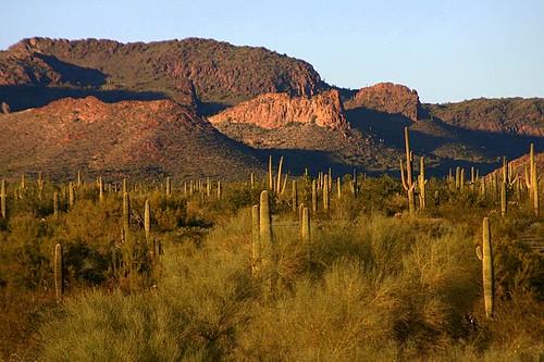 arizona landscape geocoded suguaro