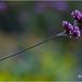 Purple Haze by Evert Lancel