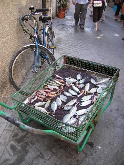 pescado de porcelana - sicilia