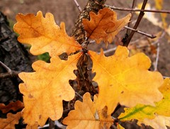 Fall & colours.