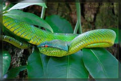 animal, serpent, western green mamba, snake, reptile, green, fauna, jungle, scaled reptile,