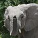 Chobe National Park #1