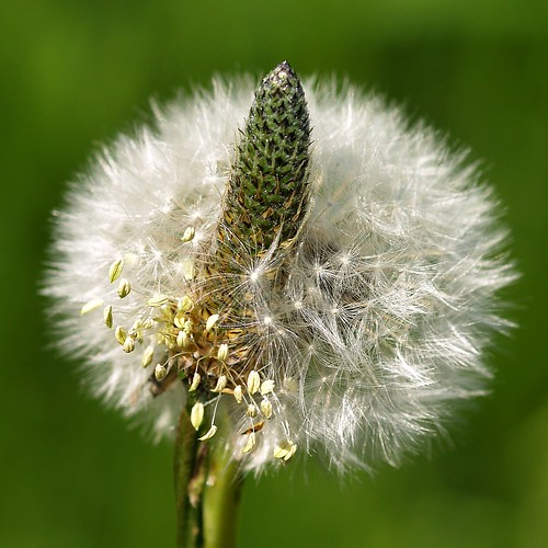 Today if found an unusual flower.