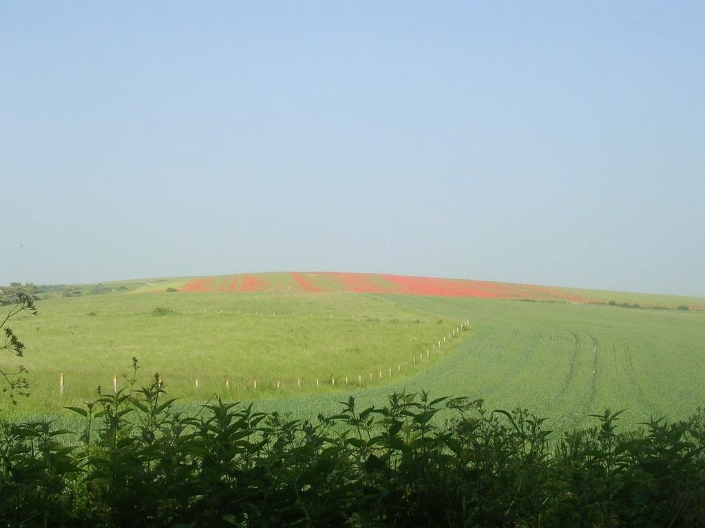 Downs Eruption.... ...of poppies. Lewes to Rodmell (via Northease) to Seaford