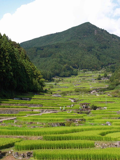 千枚田 Rice terraces