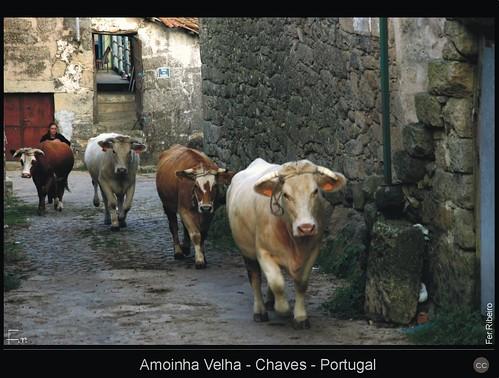 Amoinha Velha - Chaves - Portugal