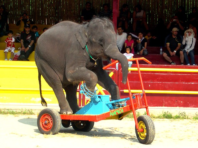{ who said elephants can't ride a bike ?!