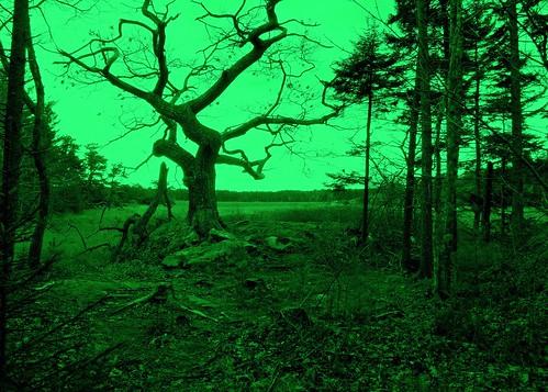 maine thesentinel sewallbeach batesmorsemountain phippsburgh treehugger007