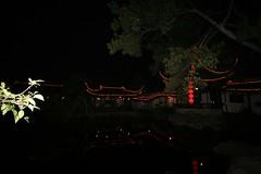branch, landscape lighting, light, darkness, midnight, night, lighting,