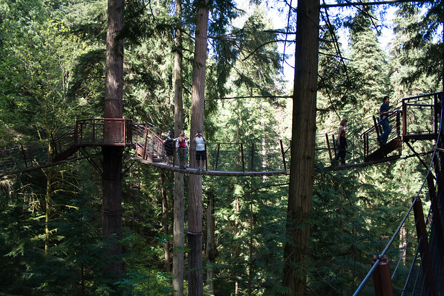 View from treetop walk