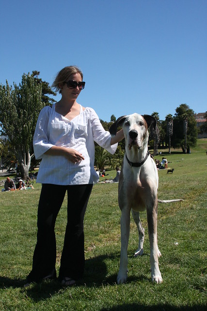 Largest Great Dane http://www.flickr.com/photos/brandybones/2644712391/