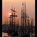 sail-amsterdam-2005