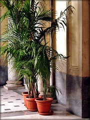 urns, pots and planters
