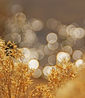 ~Golden Honey And Bokeh Reflection~