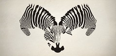 zebr'all