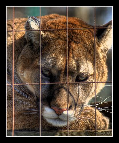 photo of animals