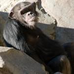 Los Angeles Zoo 059