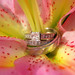 Another beautiful set of rings by Teresa's PhotoWorks