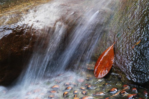 china park red orange brown nature rock stone geotagged waterfall leaf spring long exposure pebble guangdong 中国 zhuhai 公园 广东 珠海 artisticexpression gongyuan ©allrightsreserved bailiandong goldstaraward natureandnothingelse geo:lat=22247863 geo:lon=113555127 白莲洞