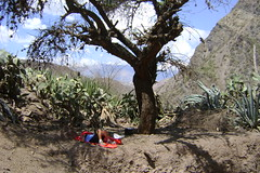 DSC02091 Resting under what seemed the only tree in the canyon - Huancayo-Ayacucho road