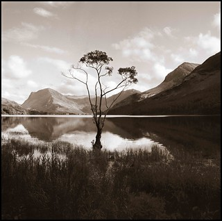 Solitary Tree - Buttermere,Lake District National Park