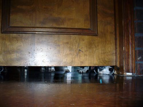 2008-10-24- Refinishing the Floors - 0013