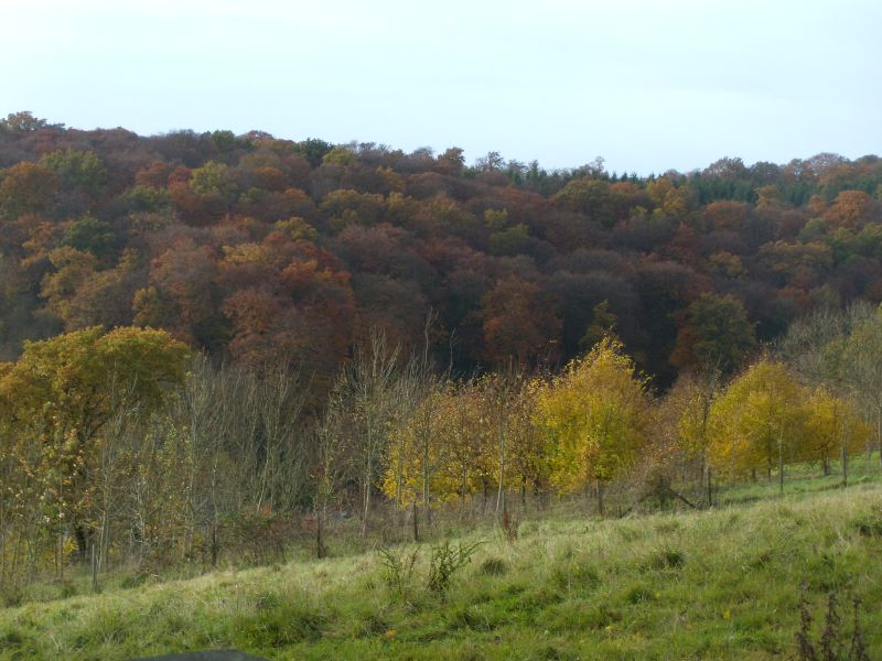 Autumn colour Princes Risborough to Great Missenden