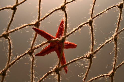 trapped starfish