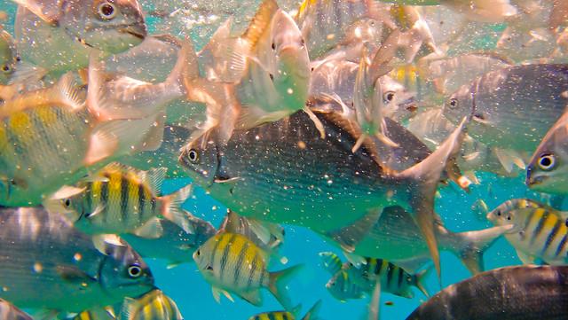 Snorkeling Barbados