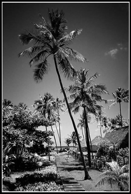 Praia de Forte Yashica T4 Zoom @ 28mm
