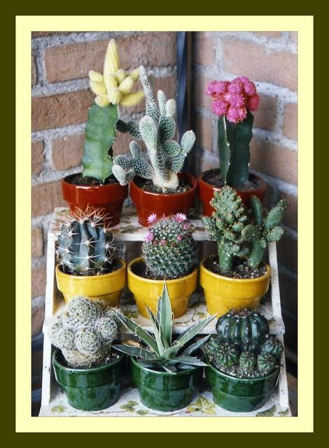 Composizione delle mie piante grasse img312 flickr - Composizione piante grasse giardino ...