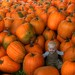 lots o pumpkins