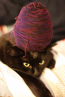 Fun with Yarn and Cat