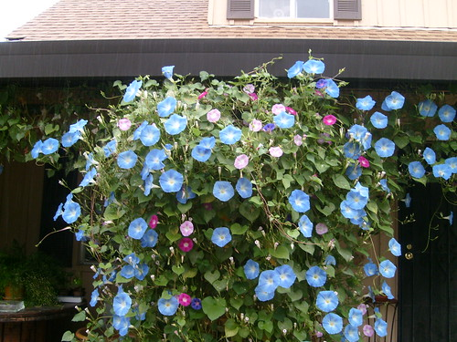 Love The Front Porch Filled With Morning Glories