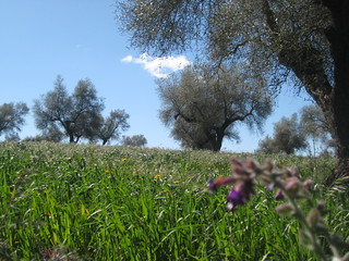 Primavera a Extremadura