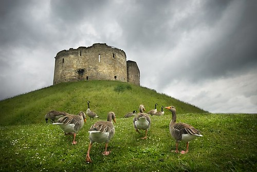 Oh, the grand old duck of York....