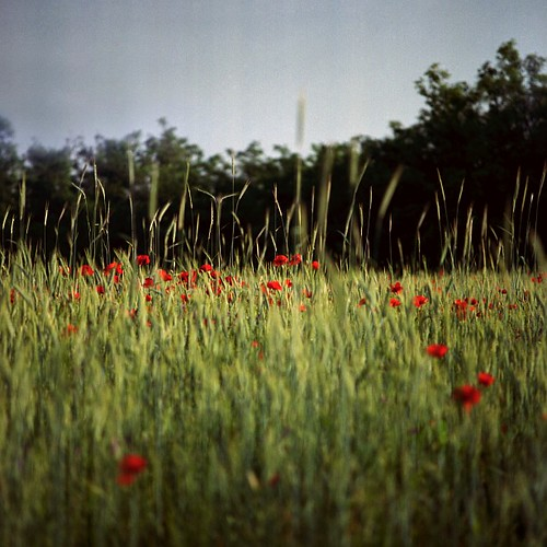 120 film analog mediumformat bronica poppy palabra bsquare bronicasqa
