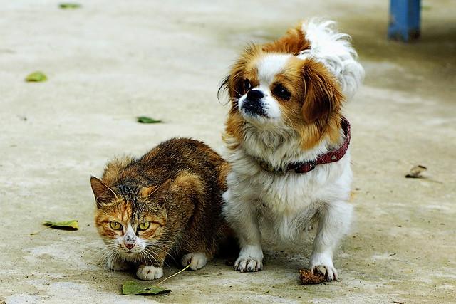 A cat ,a dog