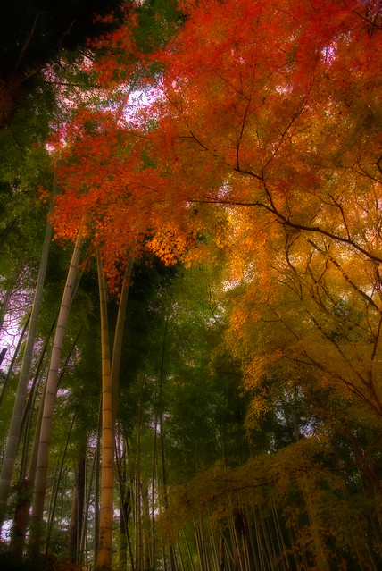 Bamboo with Maples in Autumn No.2