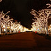 Unter den Linden for Christmas