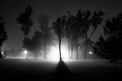 foggy scene with trees