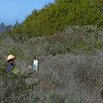 Barbara Rosenthal Painting in the Elfin Forest in Los Osos, CA 08 March 2008 1 of 4