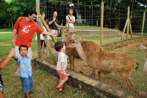 Animals In Mauritius