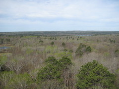 View from the top of the fire tower