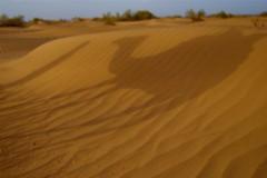 grassland(0.0), erg(1.0), sand(1.0), aeolian landform(1.0), natural environment(1.0), desert(1.0), dune(1.0), landscape(1.0), sahara(1.0), singing sand(1.0),