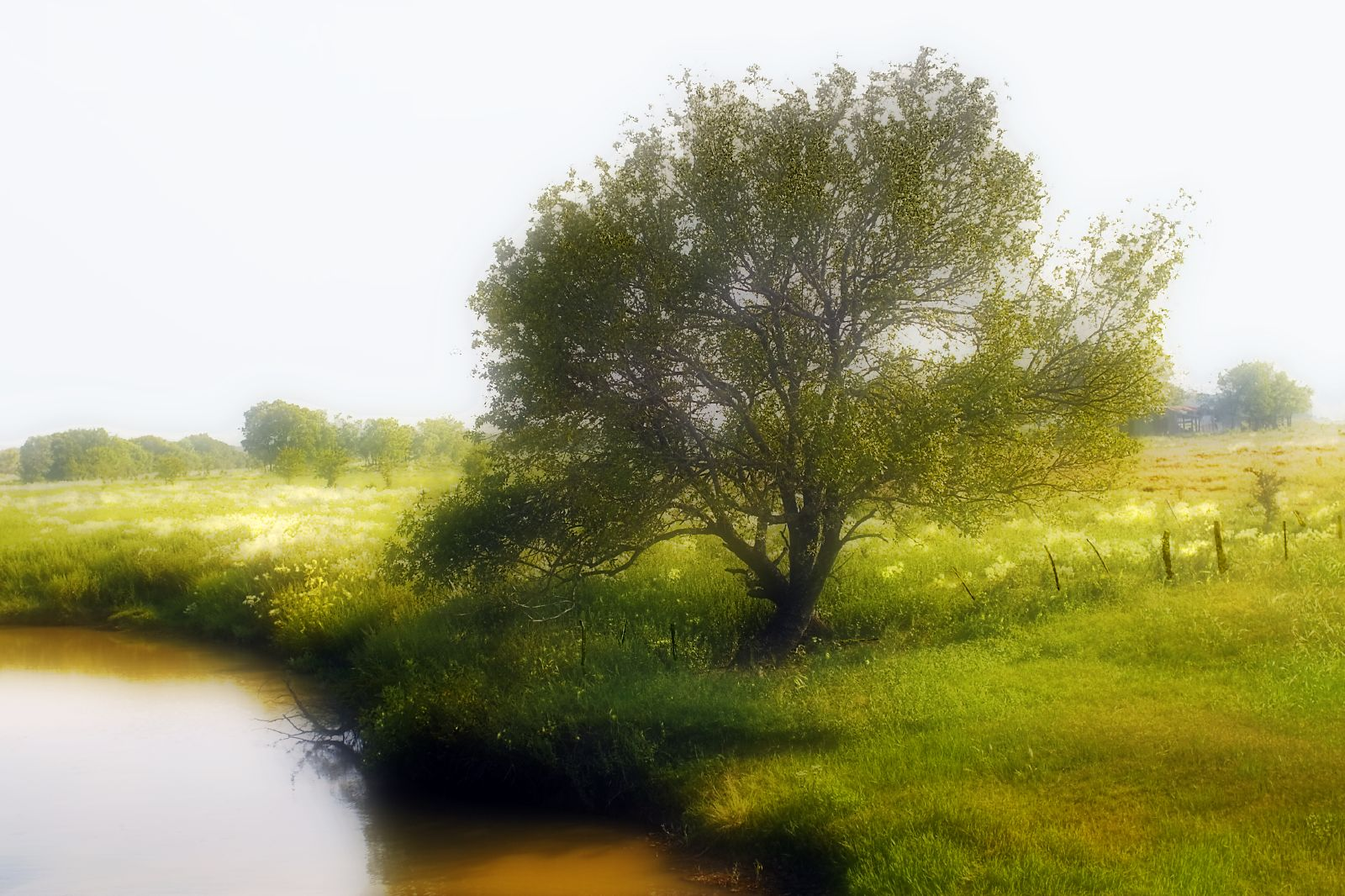Tree Planted By The Water