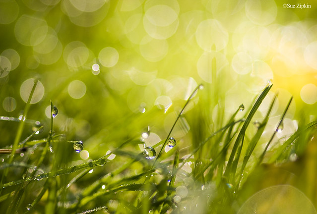"Zipkin "" Dewing the Dew-keh in the grass "" by suezart (still off designing,miss you! )"